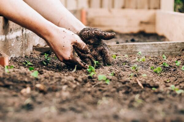 初心者にもおすすめ秋冬野菜栽培&アイテムをご紹介!栽培のお困りごともプロが解決!